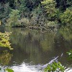 Photo de Bois de la Cambre
