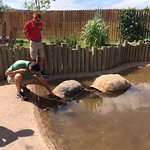 100+ year old giant tortoises