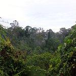 Amazing morning rainforest canopy