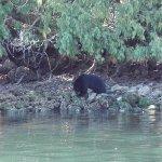 One of many bears