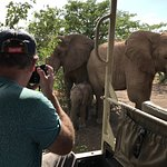 Amaxing moment - under the trees with a family of Desert Elephants.