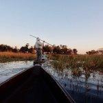Photo de Moremi Crossing Camp