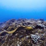 Green Moray Eel in Cozumel