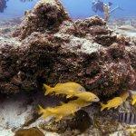 Beautiful marine life in Cozumel