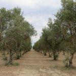 Photo of Masseria Bosco