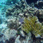 Fan and Brain Corals