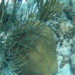 Beautiful Brain Corals