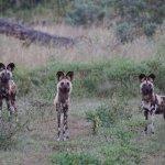 Foto de Wilderness Safaris King's Pool Camp