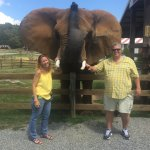 Meet and ride an elephant