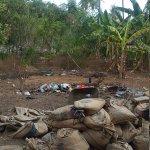 Photo of Scallywags Mango Retreat