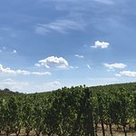 A snapshot of the vineyards