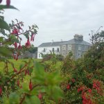 Kilmurvey House through wild fuchsia