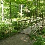 BW Falls trail, one of many small bridges