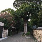 Foto de Yuzuruha Shrine