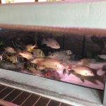 Foto de Gumbo Limbo Nature Center