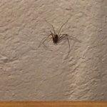 Una de las arañas que encontramos en la cabaña.