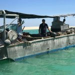 The boat cleaning about 1,000 shells a day!