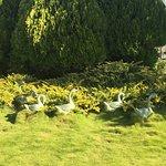Hunter Valley Gardens Foto