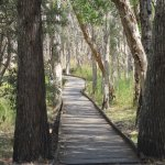 Banksia walkways