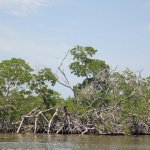 Photo of Sian Ka'an Biosphere Reserve