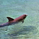 Foto de Moorea Dolphin Center