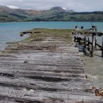 Quail Island jetty where Scott and Shackleton quarantined their ponies and dogs 1901-1910.
