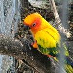 Pretty parrots near dining