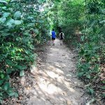 Trailing fellow runners - MacRitchie Reservoir Trail