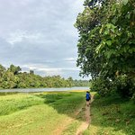 Opening up - MacRitchie Reservoir Trail