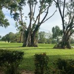 Private Golf Club grounds - MacRitchie Reservoir Trail