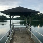 On the MacRitchie Reservoir Trail