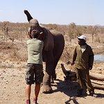 Photo of The Elephant Camp