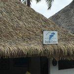 Photo of Moorea Dolphin Center