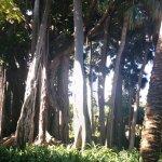 Photo of Botanical Gardens (Jardin Botanico)