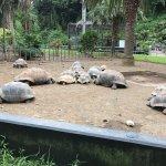 亀さんたちが自由にのびのび過ごしていて、幸せな気持ちになる(╹◡╹) 亀好きにはたまらん!