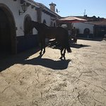 Finca La Alegria Photo