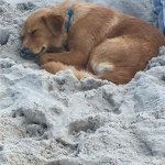 All tired out after all that playing in the surf