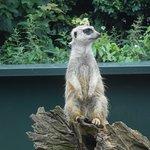 Foto de Thrigby Hall Wildlife Gardens