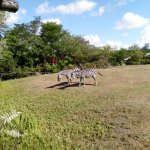 Photo de Zoo de Pessac