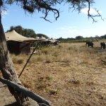 Photo of Somalisa Camp