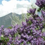 Foto de Sage Waters of Taos