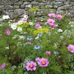 Colourful flowers in the walled garden
