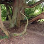 Intricate tree