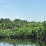 Foto de Annie Miller's Son's Swamp and Marsh Tours