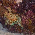 Octopus on night dive
