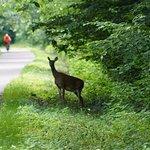 Wildlife is often seen along the way.