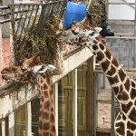 Foto de Blackpool Zoo