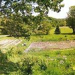 Le jardin, vu de la terrasse
