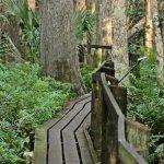 Bild från Highlands Hammock State Park