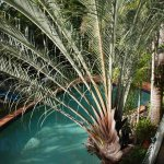 Wonderful Palms